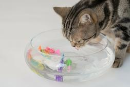 Blackhole Interactive Swimming Robot Fish Toy for Cat with L